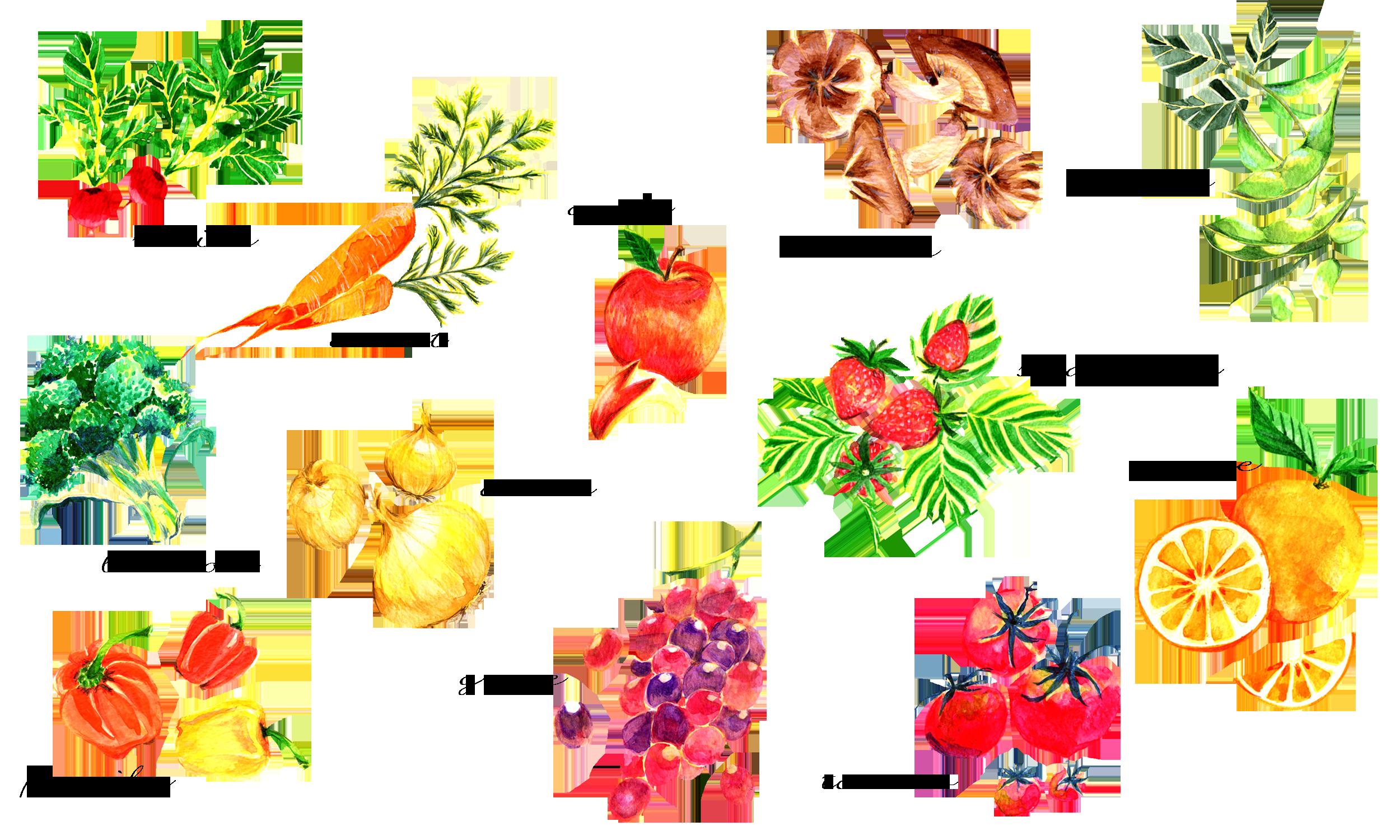 野菜の素材